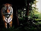 Slot_Untamed_Bengal_Tiger_137x103